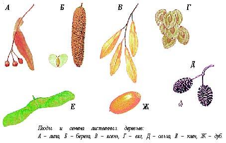 Хранение и подготовка семян к посеву